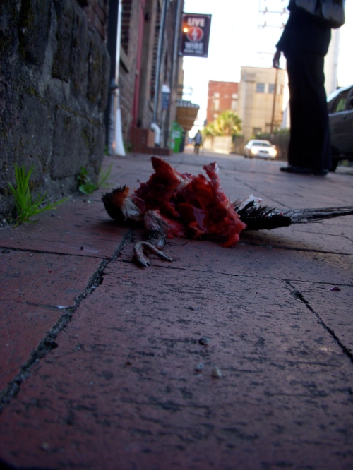 mutilated bird on street